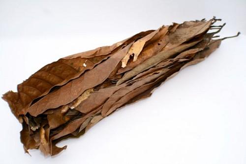 Dry almond leafs - Trockene mandelblätter